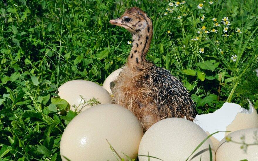 Согласны ли вы отдать за яйцо 30 евро? Литовцы активно раскупают эти яйца