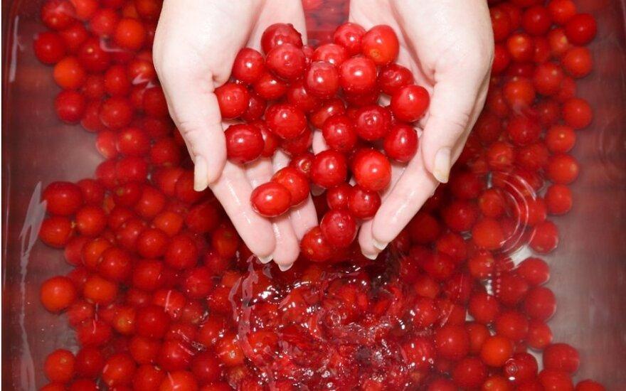 В Финляндии инспекторы проверят иностранных сборщиков ягод