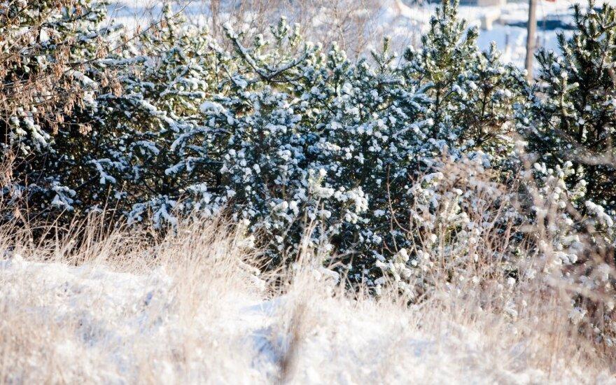 Прогноз: зима точит зубы – ожидается мороз до -20