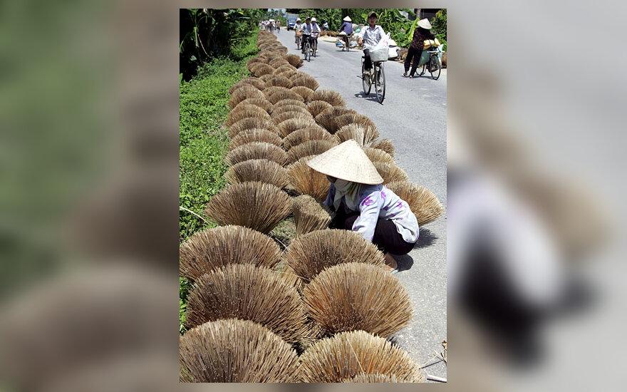 Bambukinių lazdelių krūmeliai