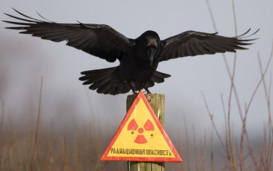 Украина просит США, ЕС и НАТО помочь в защите ядерных объектов