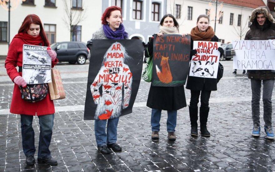 Protesto akcija prieš kailinininkystės pramonę