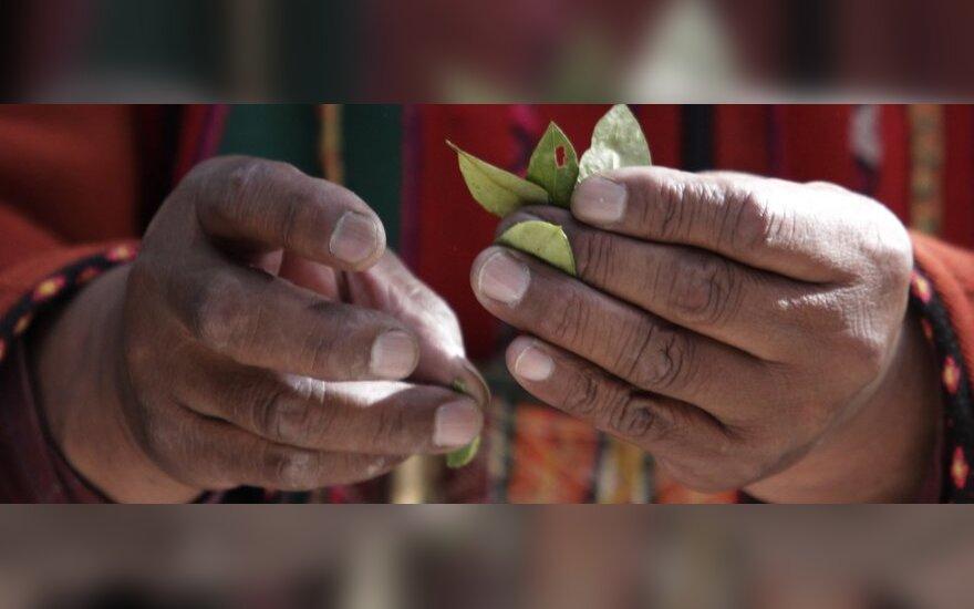 Путин решил запретить боливийцам жевать листья коки