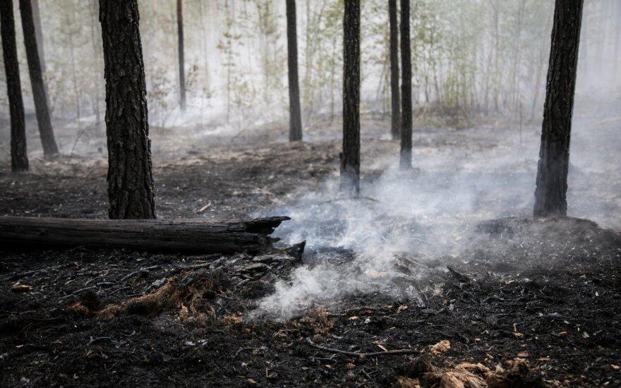 Запрет на посещение лесов введен в 82 районах Беларуси