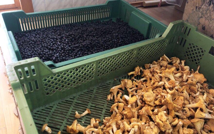 В Литве открылись первые места скупки ягод и грибов: сколько удастся заработать этим летом?