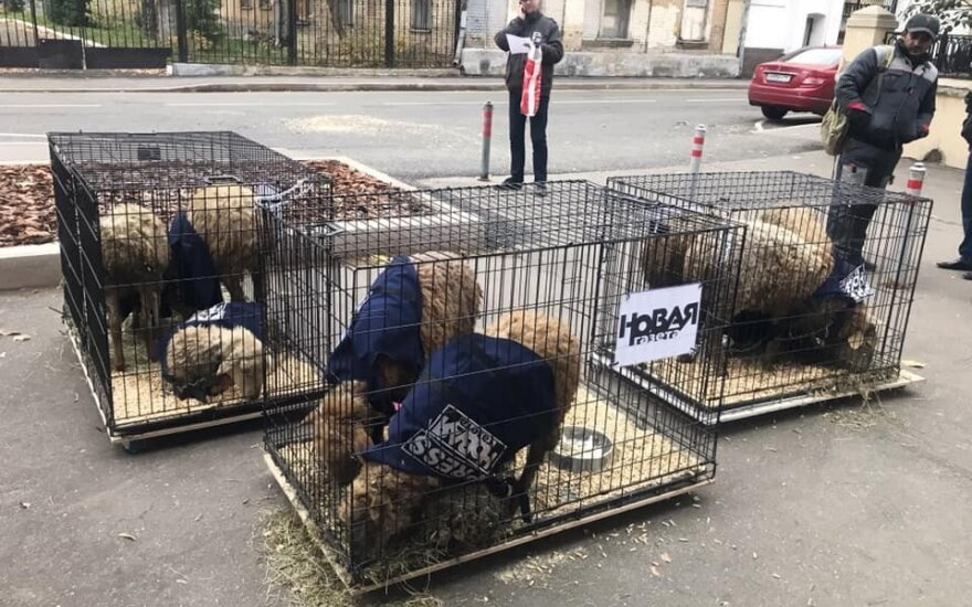 """К редакции """"Новой газеты"""" принесли клетки с овцами"""
