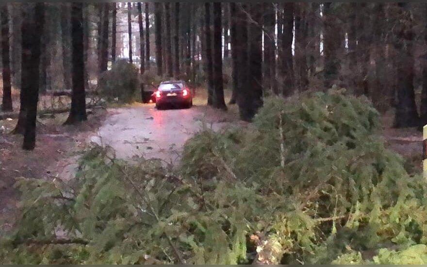 На территории Литвы бушевала буря: валила деревья, сносила крыши