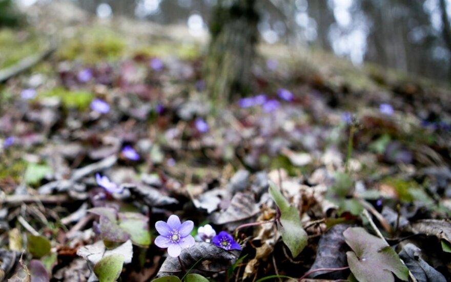 Прогноз на март: скоро ли весна?