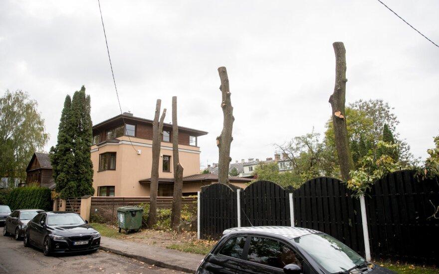 Невиданная наглость: во что известный предприниматель превратил деревья
