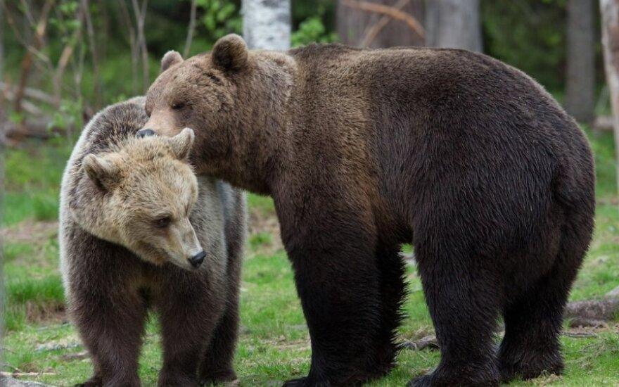 В Якутии спасли женщину, рожавшую в глухой тайге в окружении медведей