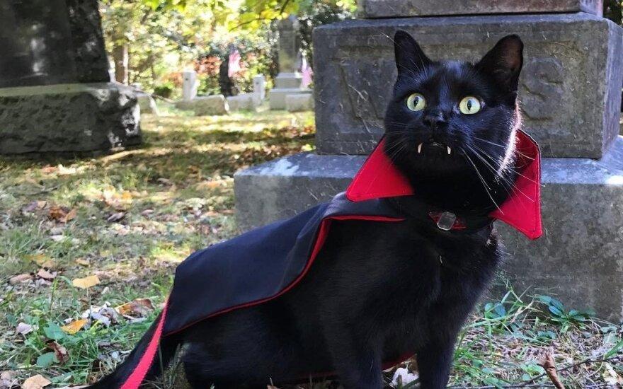Черный кот с вампирскими клыками