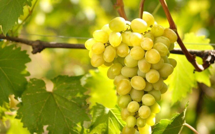 В Калининградскую область начали завозить разрешенные сербские яблоки и малайзийский виноград