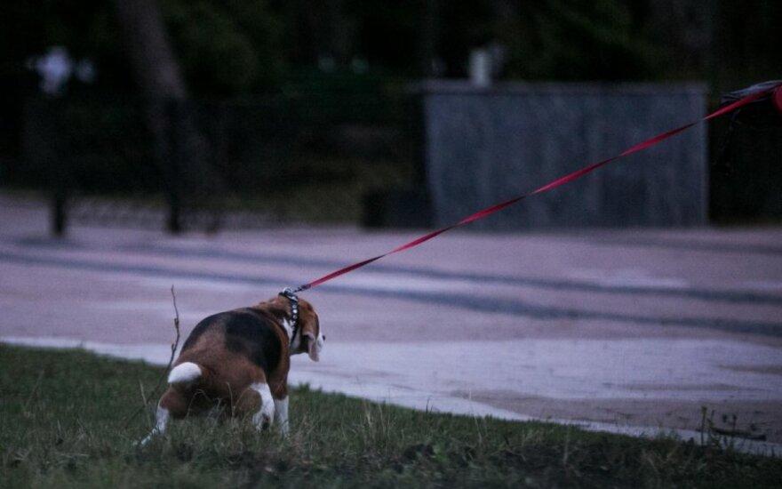 Reido metu stebėtas šuo