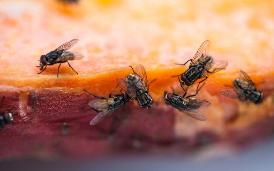 Исследование: мухи представляют смертельную угрозу
