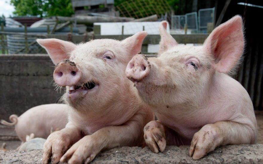 Россия останавливает импорт охлажденного мяса из Литвы