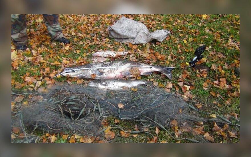 Brakonierių sugautos keturios žuvys, tarp jų lašiša, atsieis beveik 15 tūkst. litų