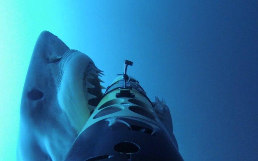 Podwodny robot ujawnia okrutne taktyki rekinów