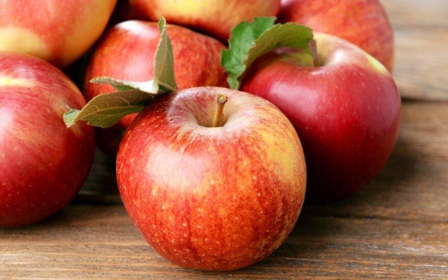 В Свердловской области уничтожили литовские яблоки