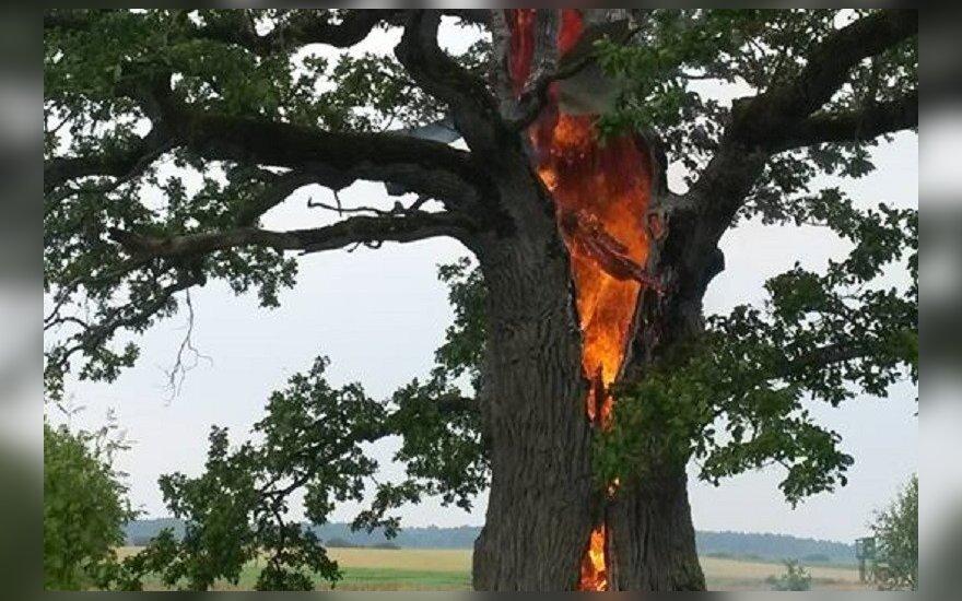 Užfiksavo degantį ąžuolą/ Rimos nuotr.