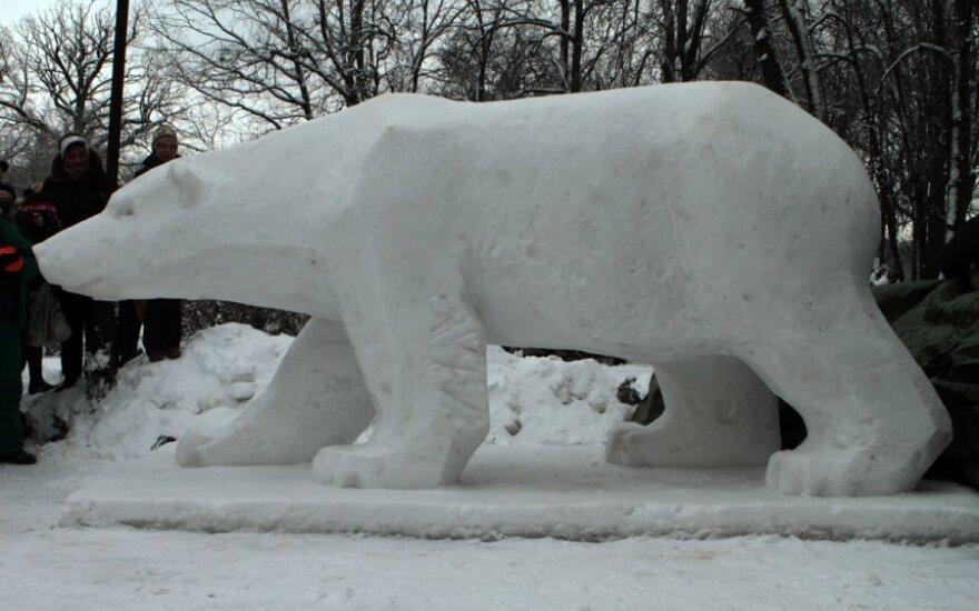 Sniego skulptūra baltajam lokiui Kasparui