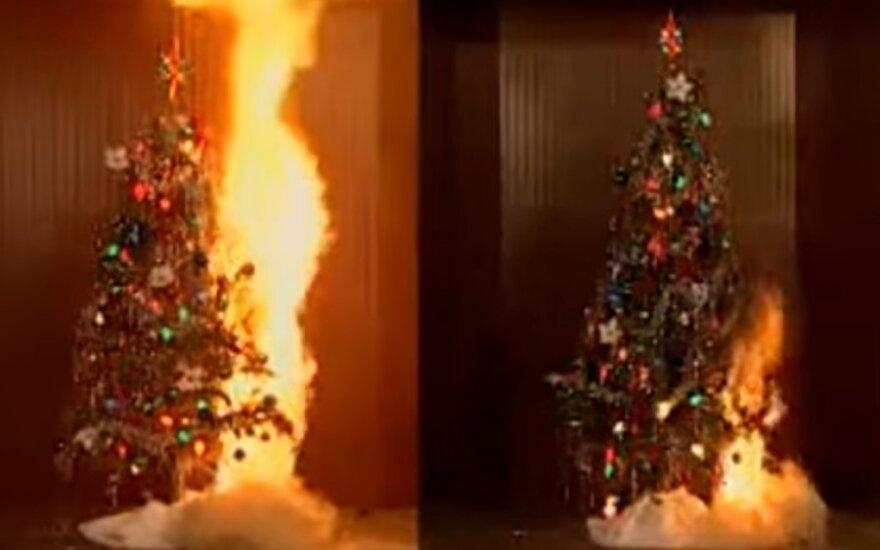 Porównanie jak płonie sucha i podlewana choinka bożonarodzeniowe