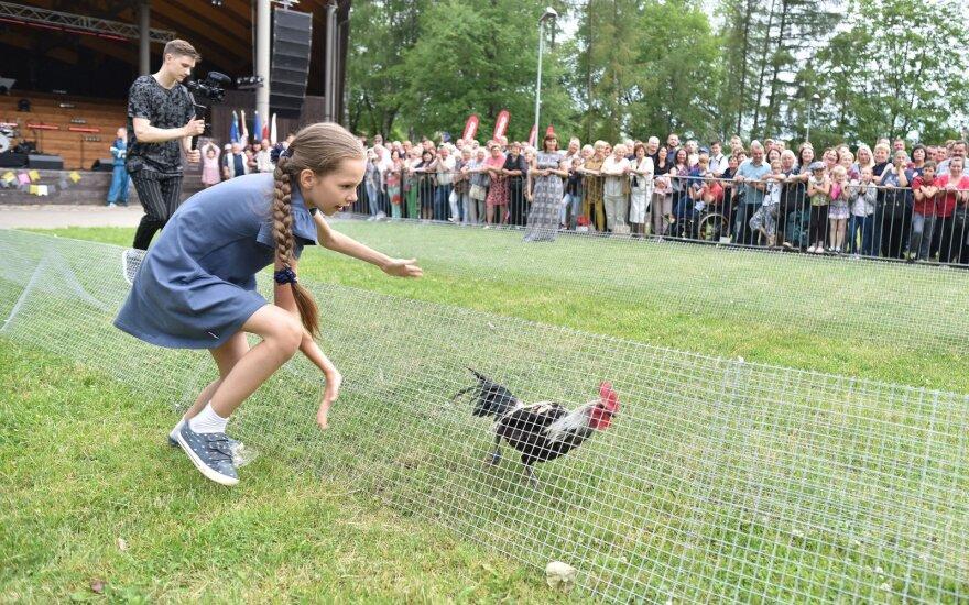 В Лаздияй состоялись куриные бега