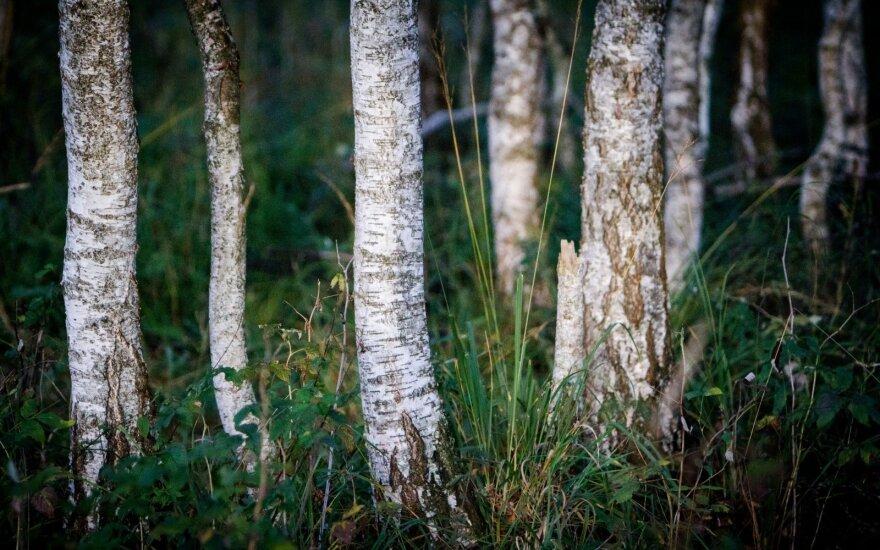 Пропавший подросток найден в лесу