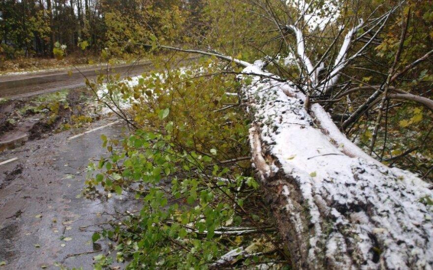 В Лаздияйском районе на автомобиль упало дерево, пострадал водитель