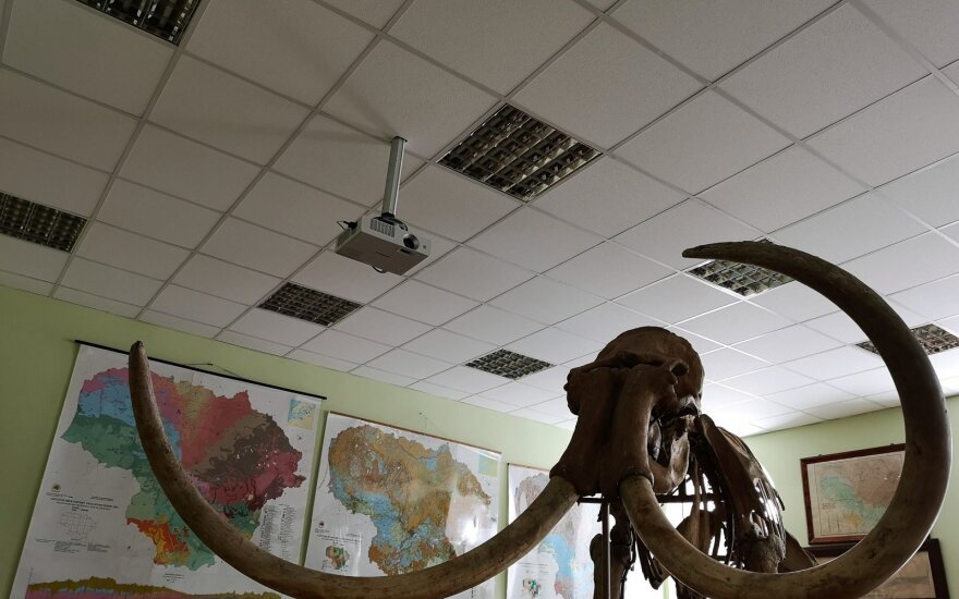 Mamuto skeletas