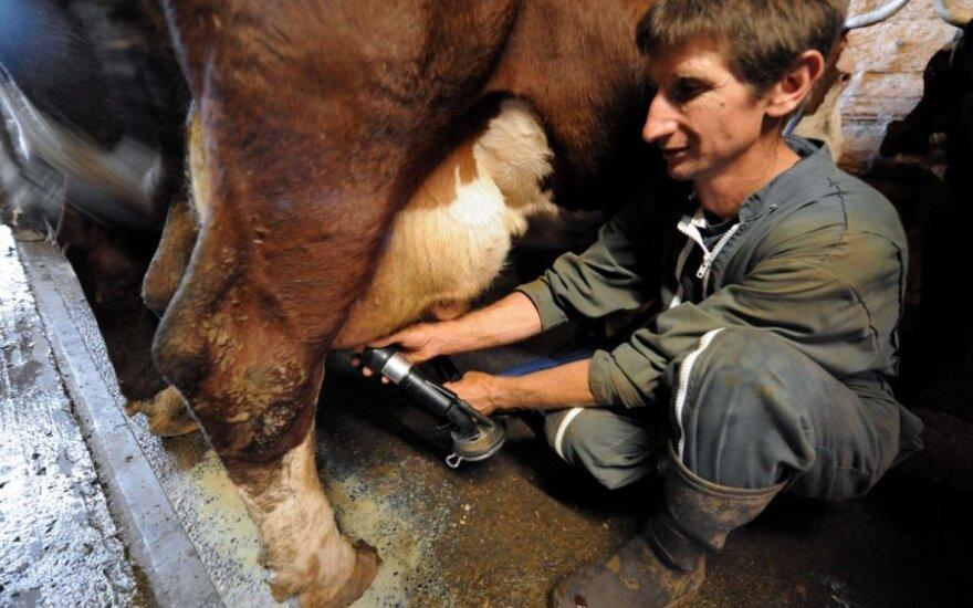 Литовские переработчики прогнозируют снижение закупочных цен на молоко