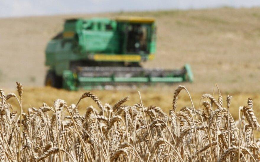 Экспорт зерна из Литвы в сентябре увеличился на треть