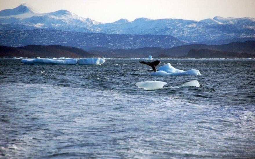 Australija aiškiai išreiškė poziciją, jog nepageidauja banginių medžioklės laivų savo teritorijoje