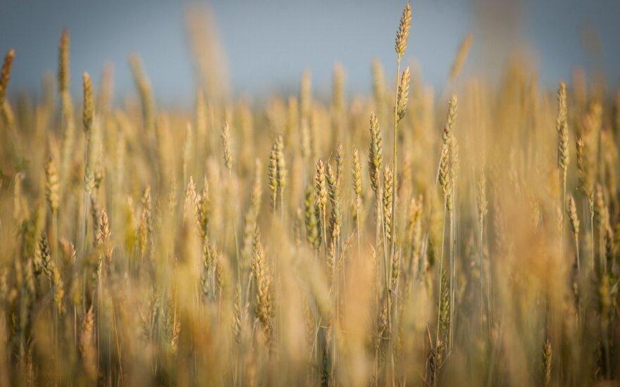 Американские эксперты: РФ может использовать экспорт зерна в политических целях