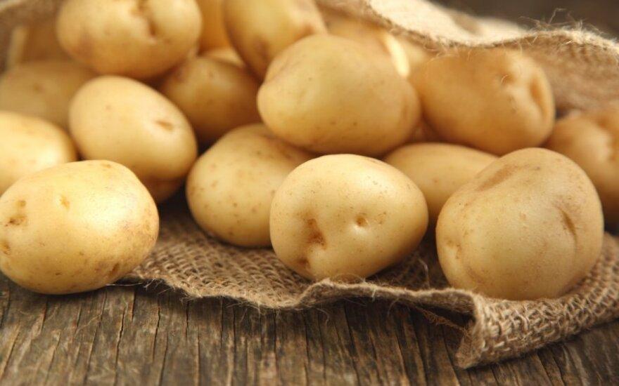 """Латвиец пытался ввезти в Россию """"потенциально опасный картофель"""""""