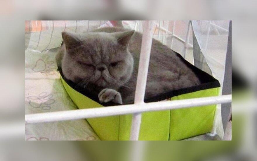 В Таллинне прошла международная выставка кошек