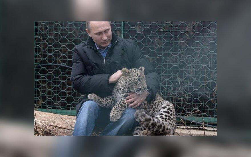 Путин поигрался с леопардом и восхитился способностью хищника спариваться