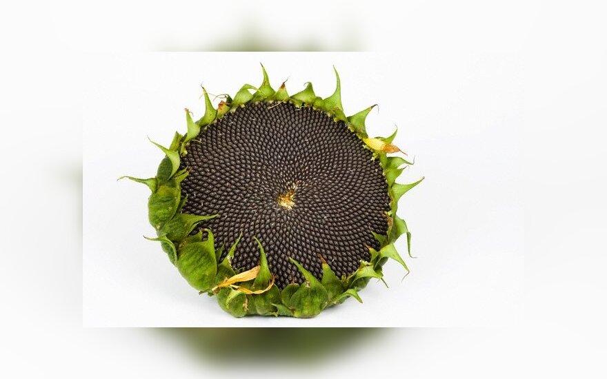Обнаружено удивительное свойство семечек