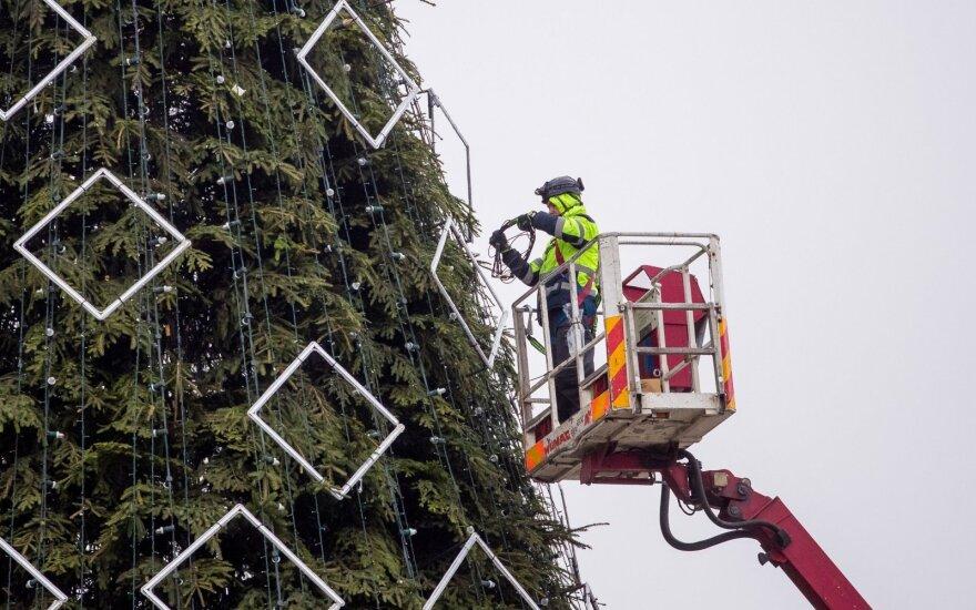 Vilniuje puošiama pagrindinė sostinės kalėdinė eglė