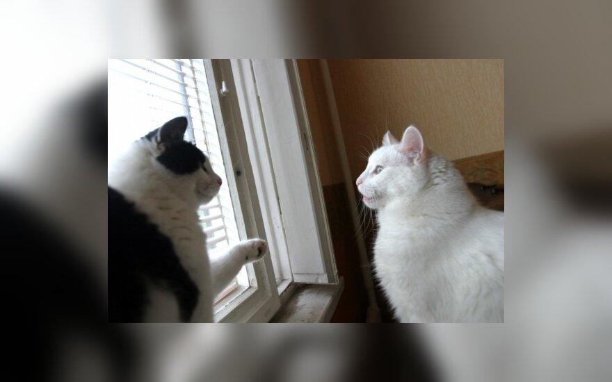 В Вильнюсе будут стерилизовать бродячих кошек