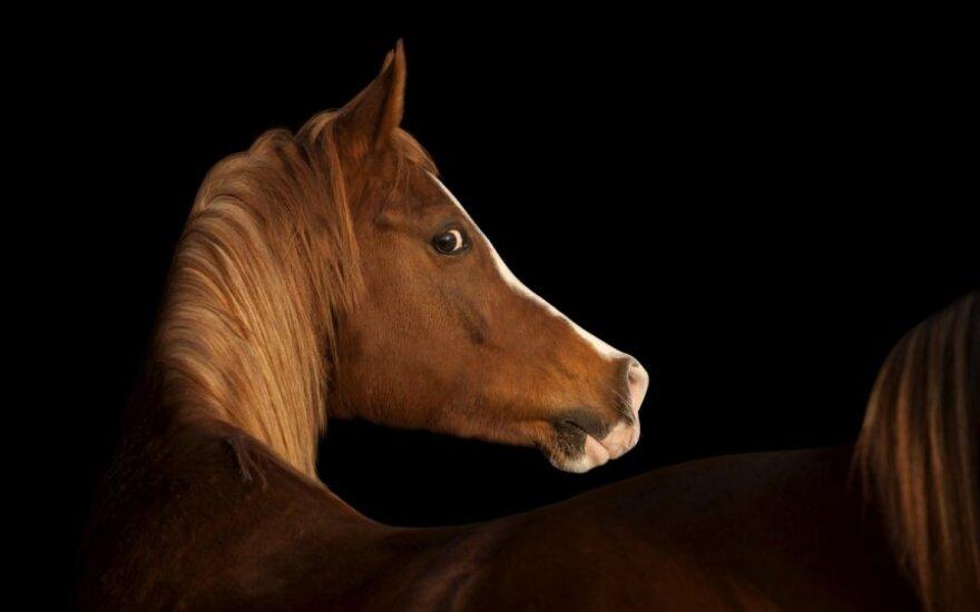 Шторм на Балтике: на борту парома погибли дорогие лошади