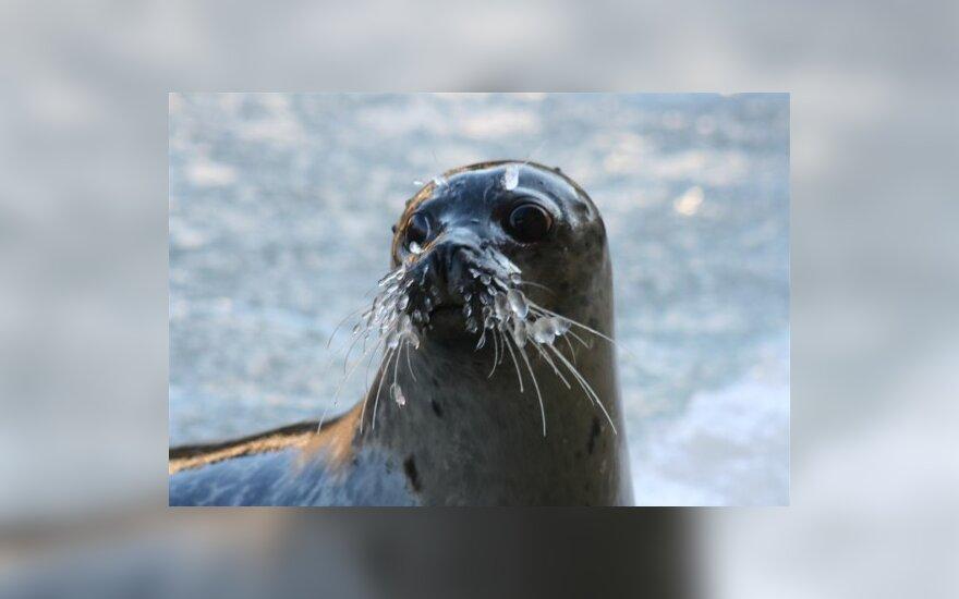 В Новой Зеландии неизвестные убили 23 морских котиков