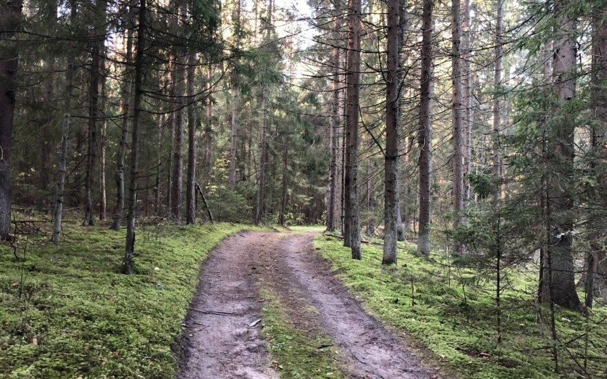 miškas, miško kelias