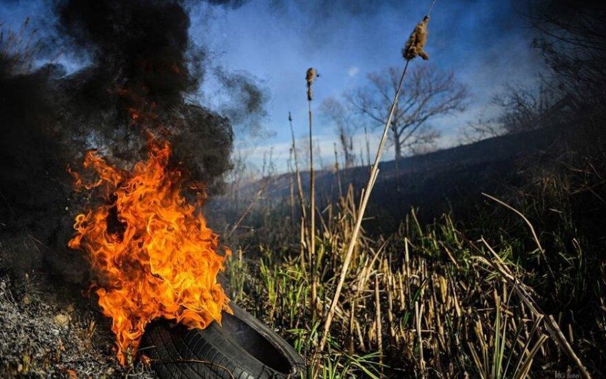 Dega žolė ties Panevėžiu