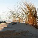 Pajūris, smėlis, kopos
