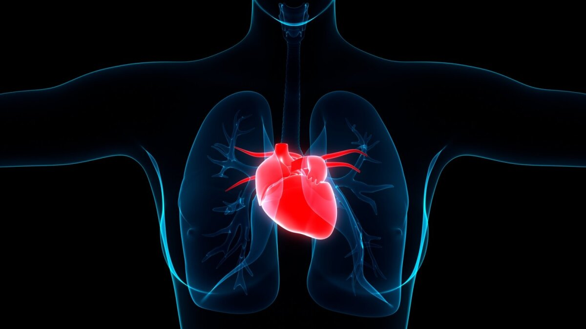 hipertenzija gudobelė