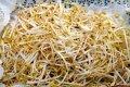 Lietuva sieks visiškai uždrausti auginti bet kokius GMO