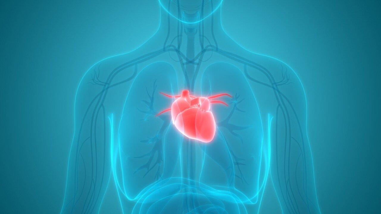 galva širdis rankų sveikata)