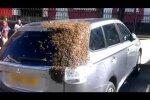 Nematytas reiškinys: tūkstančiai bičių daugiau nei parą terorizavo moters automobilį