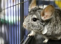 Parengtas pirmasis Lietuvoje leidžiamų nelaisvėje laikyti ir veisti žinduolių rūšių sąrašas