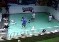 Dubajuje – specialus vandens pramogų parkas šunims